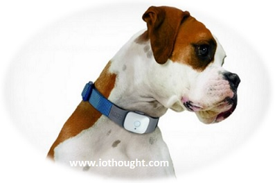 iot-pet-devices