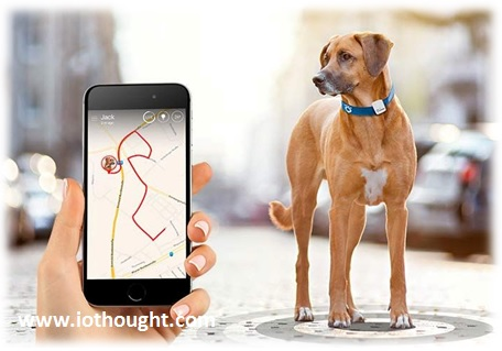 iot-pet-tracking-technology