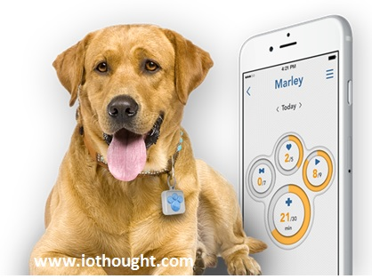 iot-pet-tracking