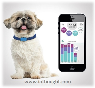 pet-tracking-technology-iot-products