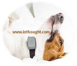 whistle-pet-tracking-contact